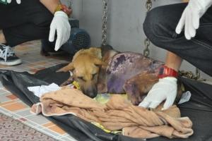 คนใจร้ายสาดน้ำร้อน วางยาเบื่อแม่หมา จับลูก 5 ตัวใส่ถุงดำทิ้ง