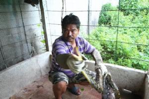 แม่บ้านตกใจเป็ดเลี้ยงไว้ในกรงหายกลายเป็นงูเหลือมเข้ามาอยู่แทน