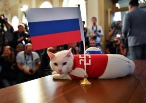 """รอเช็กความแม่น """"อาร์คิลีส"""" เหมียวเสี่ยงทาย  ฟัน """"รัสเซีย"""" เก็บ 3 แต้ม ประเดิมบอลโลก"""