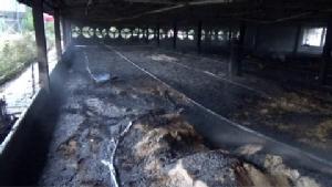 ไฟไหม้ฟาร์มไก่ราชบุรีวอด 2 ล้าน ลูกไก่ 2 หมื่นตัวตายอนาถ