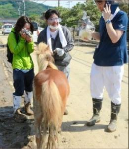 """""""ม้าฉันอยู่ไหน!"""" ผู้สูงวัยญี่ปุ่นตามหาม้าหนีน้ำท่วมใหญ่ พอเจอถึงกับอึ้ง"""