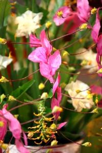 """หนึ่งเดียวในโลก! """"ตักบาตรดอกเข้าพรรษา""""สระบุรี ประเพณีงดงามเป็นเอกลักษณ์"""