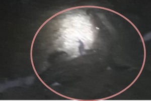 นายกราไวย์ยืนยันจระเข้แน่นอน เห็นชัดๆ ขึ้นมานอนบนชายหาดในหาน จ.ภูเก็ต