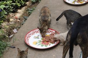 TSPCA ลงพื้นที่ช่วยเหลือสุนัขแมวจรจัดขาดแคลนอาหาร รณรงค์ห้ามปล่อยสัตว์ในวัด