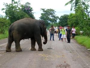 อ.บ่อไร่ เตรียมหาแนวทางแก้ปัญหาช้างป่าหลังพบจำนวนเพิ่มมากขึ้นเรื่อยๆ