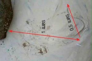 โผล่อีกรอบหลังหายไป 2 วัน จระเข้ที่ภูเก็ต ล่าสุดพบหาดบางเทา วางกรงดักจับ