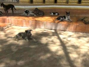 เศร้าสลด! หมาแมวจรจัดเฝ้าไม่ห่างศพลุงใจบุญเป็นลมดับ หลังพระนอนในวัดหัวเขาที่ตรัง