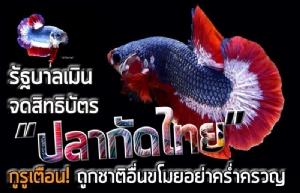 """รัฐบาลเมินจดสิทธิบัตร """"ปลากัดไทย"""" กูรูเตือน ถูกชาติอื่นขโมย-อย่าคร่ำครวญ"""