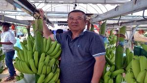 เกษตรกรราชบุรีหัวใส! ปลูกกล้วยหอมเขียว ต่างชาติสนใจเพียบ