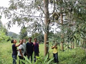 เต็มแล้ว! นักท่องเที่ยวแห่จองคิวกินบุฟเฟต์ทุเรียนหมอนทองที่สวนเกษตรสมชายแน่น