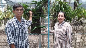 น่าทึ่ง! ชาวนาสุโขทัยเลี้ยงกล้วยไม้ขายออนไลน์ส่ง 5 ประเทศ ชวนชมคล้ายอวัยวะเพศก็มี (ชมคลิป)