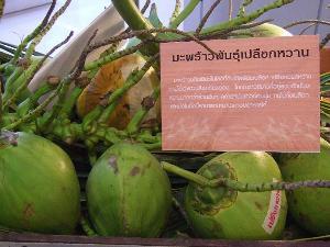 มะพร้าวเปลือกหวาน สายพันธุ์อนุรักษ์หายาก  มีอยู่จริงในประเทศไทย