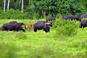"""""""สยาม ไวเนอรี่"""" สานต่อปณิธานในการอนุรักษ์ธรรมชาติ ร่วมฟื้นฟูพื้นที่ป่า เพิ่มแหล่งอาหารสัตว์ สร้างสมดุลในการอยู่ร่วมกันของคนและป่า"""