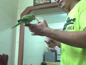 """สุดน่ารัก! หนุ่มห้วยยอดฝึก """"นกแก้ว"""" ทำตามคำสั่งอย่างแม่นยำ ทั้งฉลาด ขี้เล่น แถมอารมณ์ดี"""