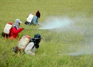 บริโภคผักผลไม้ 99 ใน 100 มีสารพิษตกค้าง! เหตุ ขรก.รู้เห็นให้ใช้สารอันตรายฆ่าหญ้า