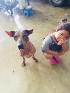 """""""เตเต้"""" สุนัข 2 ขาที่แข็งแกร่งที่สุดในปฐพี"""