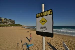ผวา! หาดดังออสซีเกิดเหตุฉลามกัดคน 2 ครั้งซ้อนในวันเดียว