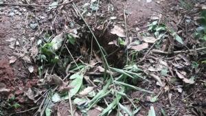 ชาวบ้านขึ้นเขาภูหลวงหาหนอนไม้ไผ่ เจอช้างป่าไล่กระทืบดับ