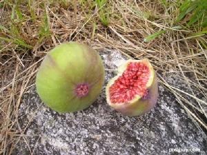 มะเดื่อฝรั่ง ผลไม้แปลก โภชนาการสูงอันดับ 1 ใน 10 ของโลก