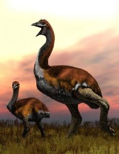 """สิ้นข้อถกเถียง """"นกยักษ์"""" ที่สูญพันธุ์ 1,000 ปีก่อน"""