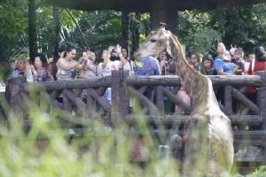"""""""เขาดิน"""" เปิดถึง 6 โมงเย็น วันนี้! แห่อำลา-เที่ยวส่งท้าย ก่อนปิดตำนานสวนสัตว์แห่งแรกของไทย"""