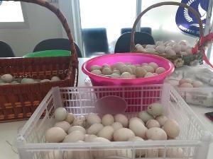 ชื่นชม! ผกก.โรงพักบ้านเป็ด โชว์ไข่เป็ดขาวอวบ ผลผลิตจากโรงเลี้ยงเดินตามเศรษฐกิจพอเพียง