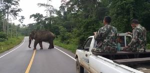 """""""บุญช่วย"""" ช้างป่าผู้น่ารัก ดาวเด่นแห่งแก่งกระจาน"""