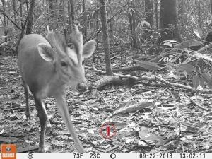 อันซีนป่ากัมพูชา พบอีกเยอะสัตว์หายากหลากชนิดประเทศนี้รุ่มรวยจริงๆ