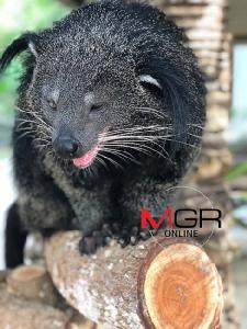 มท.1 ลงดาบสั่งฟันวินัย-อาญาปลัดล่าหมีขอ ให้ออกจากราชการ
