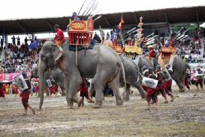 """ชมลีลาช้างไทยสุดน่ารัก ในงาน """"มหัศจรรย์งานช้างสุรินทร์"""""""