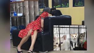 ตร.ปล่อยตัว สาวใจร้ายต้องสงสัยฆ่าโหดลููกแมว เพื่อแลกเหรียญในดาร์กเว็บ