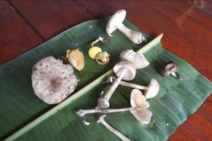 รพ.เกาะพะงันออกโรงเตือนกินเห็ดป่ามีพิษ หามส่งรักษาแล้วกว่า 40 ราย