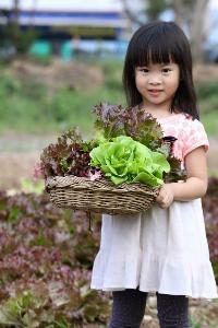 """""""ไร่ภูแสงทอง"""" ผักสดอินทรีย์ วิถีอีสาน มาตรฐาน Organic Thailand"""