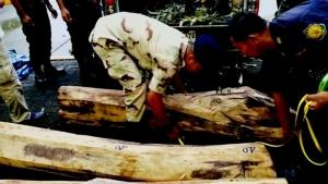 ตม.จันทบุรี สนธิกำลังหลายหน่วยไล่ล่าแก๊งลอบค้าไม้พะยูง ใช้รถขนสับปะรดบังหน้า