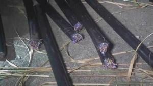 แก๊งตัดสายเคเบิลระบาดพื้นที่ศรีราชา ตำรวจรวบได้ 2 แก๊งรวด ความเสียหายประเมินไม่ได้