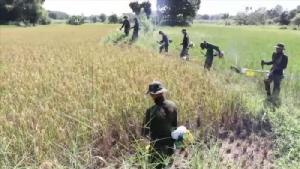 ค่ายศรีสองรักดัดแปลงเครื่องตัดหญ้าใช้เกี่ยวข้าวออกช่วยเหลือชาวนา