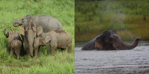 สุดน่ารัก! โขลงช้างป่าเขาใหญ่ออกหากิน และเล่นน้ำกันอย่างสนุกสนาน