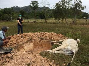 ภาพข้อมูลจาก FB สำนักงานปศุสัตว์จังหวัดสุโขทัย