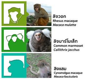 """สุดล้ำ """"เลี้ยงลิง-วิจัยวัคซีน"""" ฝีมือศูนย์วิจัยระดับโลกแห่งแรกของไทย"""