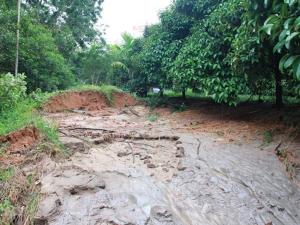ฝนหนักทำพิษเกิดน้ำป่าซัดสวนผลไม้ชาวบ้านพัทลุงราบเป็นหน้ากลอง