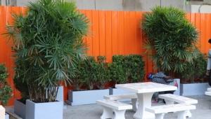 สวนนงนุชพัทยา สร้างปอดแห่งใหม่ใจกลางชุมชนบ้านครัวเหนือ กทม.
