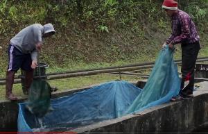 ครั้งแรก ปท.ไทย  เลี้ยงปลาสเตอร์เจียน ได้ไข่ปลาคาเวียร์ กิโลละ 5 หมื่น ผลสำเร็จ