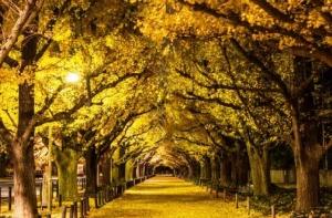ชมใบไม้เปลี่ยนสี สวยที่สุดกลางกรุงโตเกียว (ชมคลิป)