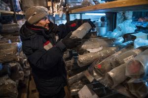 นักวิทยาศาสตร์เก็บตัวอย่างชั้นดินเยือกแข็งที่เก็บไว้ที่ พิพิธภัณฑ์การศึกษาชั้นดินเยือกแข็งคงตัว (Museum of the History of Permafrost Studies) ซึ่งอยู่ใต้อาคารของสถาบันวิจัยชั้นดินเยือกแข็งเมลนิกอฟ (Melnikov Permafrost Institute) ทางไซบีเรียตะวันออกของเมืองยาคุตสค์ (Yakutsk) ในรัสเซีย (Mladen ANTONOV / AFP)