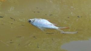 คลองท่าลาดวิกฤต น้ำขาดออกซิเจนทำปลานับ 10 ตันลอยตาย พระ-โยมเร่งเก็บซากวุ่น