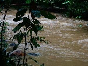 ปภ.พัทลุงเตือนประชาชนเฝ้าระวังน้ำป่าและน้ำหลากหลังเกิดฝนตกสะสมต่อเนื่อง