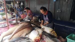 """ฮือฮา! ชาวประมงน้ำโขงจับ """"ยี่สกไทย"""" ได้ยกฝูง 14 ตัว เผยเป็นปลาหายากใกล้สูญพันธุ์"""