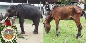 กรมอุทยานฯ ส่ง จนท.รุดช่วยช้าง-ม้า ผอมโซแล้ว แนะเจ้าของฟาร์มปรับเปลี่ยนอาหาร