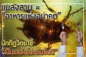 """แมลงสาบ = """"อาหารแห่งอนาคต"""" นักกีฏวิทยา ชี้ """"เป็นแหล่งโปรตีนชั้นดี"""""""