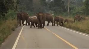 เตือนชาวบ้านเพิ่มความระมัดระวังช้างป่าทองผาภูมิ หลังพบจ่าฝูงกำลังอยู่ในช่วงตกมัน